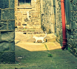 Ghost Cat Alley