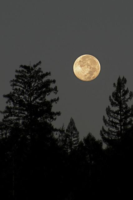 Harvest Moon - 2012
