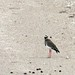 Etosha National Park impressions, Namibia - IMG_3057_CR2_v1