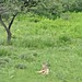 Etosha National Park impressions, Namibia - IMG_3078_CR2_v1