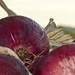 Harvest 2012 054
