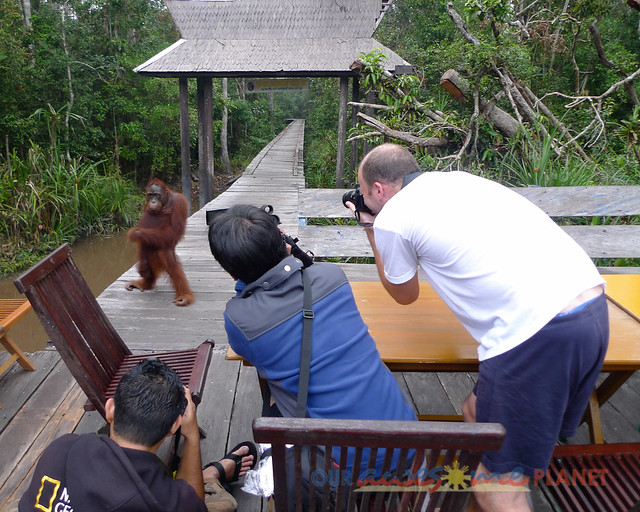 Orangutan World, Tanjung Puting Borneo Adventure-164.jpg