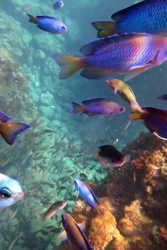 snorkeling at hirizo izu japan