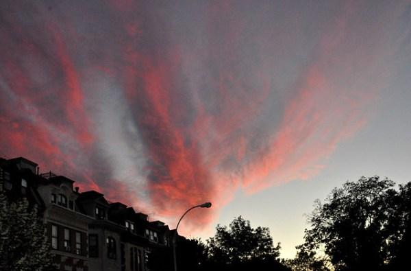 pinkparkside