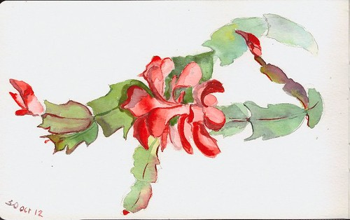 Watercolour sketch of Christmas Cactus