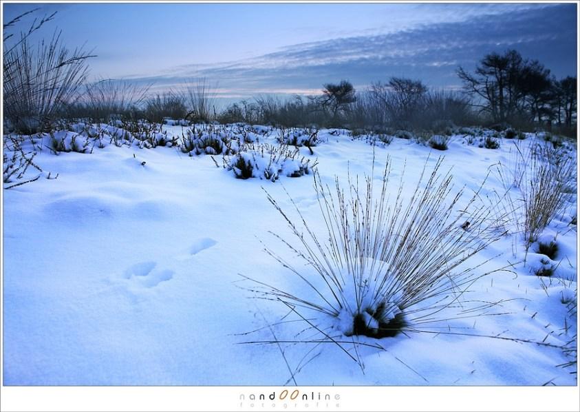 Winterbeelden van de Strabrechtse Heide