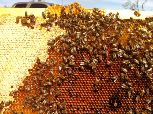 Fall honey and pollen