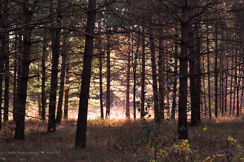 """""""Between every two pines is a doorway to a new world.""""  ~John Muir"""