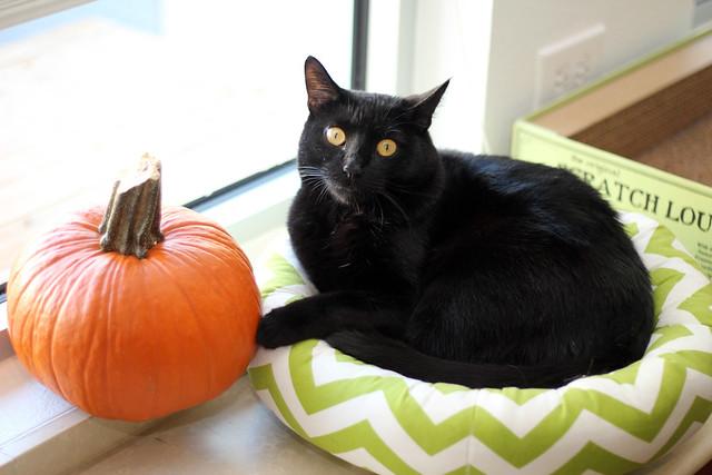 Halloween kitteh