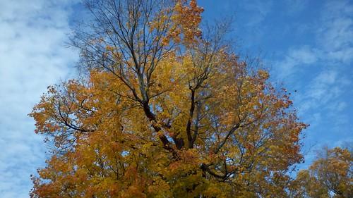 Rhinebeck tree.jpg