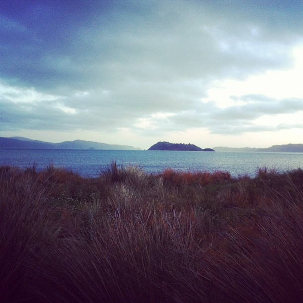 Somes from Petone