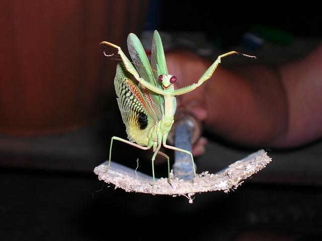 Mantis_2_100812