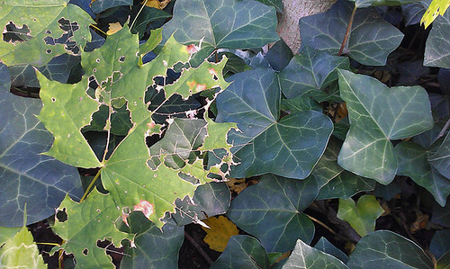 Decaying Leaves