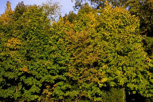 The Beginning Of Autumn
