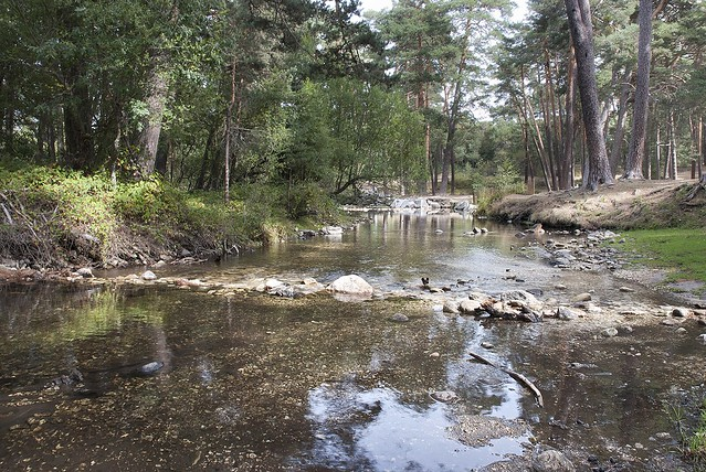 Río Eresma #2