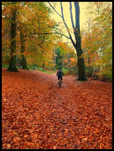 autumn ride by rOcKeTdOgUk