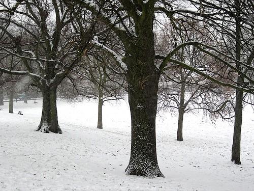 Snow-clad trees