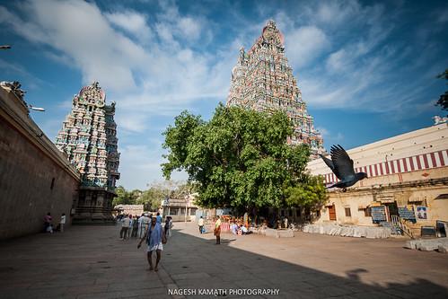 Madurai Meenakshi Temple Courtyard and Gopurams
