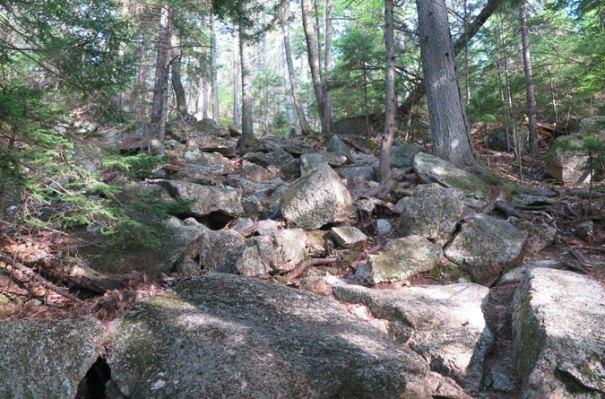 Blueberry Ledge Trail Rocks