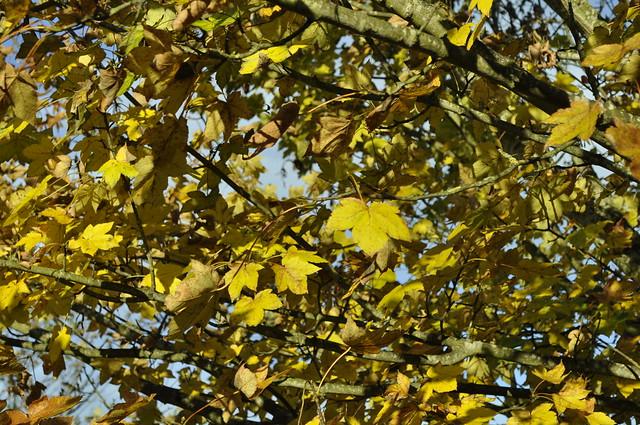 2012-11-10 Scotstown moor 09