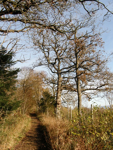 The path to the Circle O'Beeches