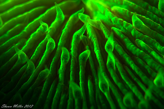 Underwater Flourescent Photography- Okinawa