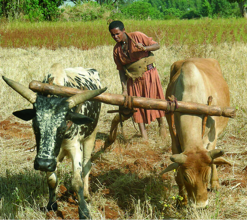 A young woman tilling the land, Bure region, Ethiopia