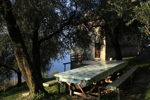 table under the olive