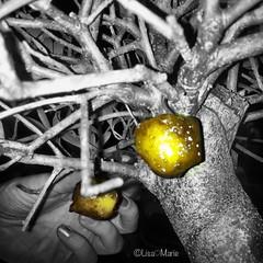2011_10 oct celler de can roca