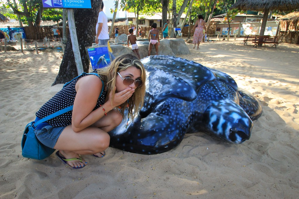 TAMAR Turtle - Praia do Forte, Bahia, Brazil