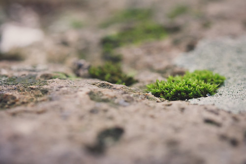 tiny bit of moss