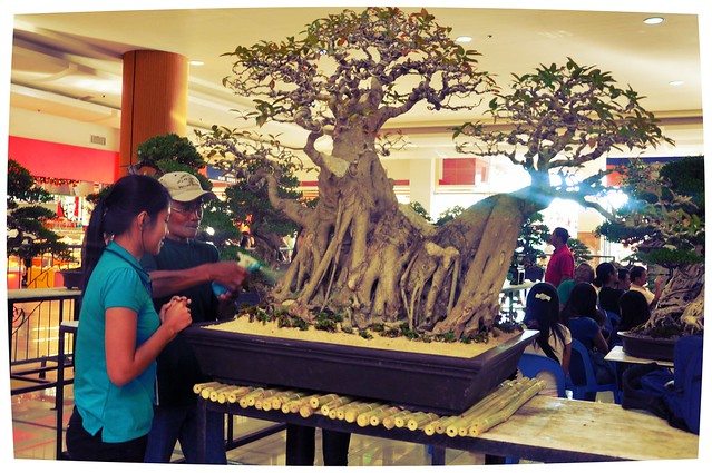 Bonsai Lovers