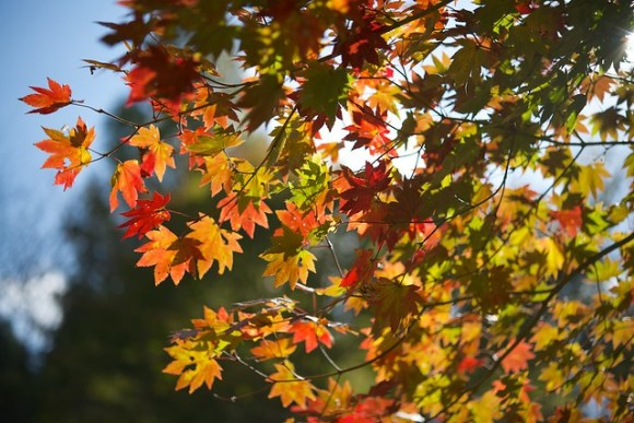 121103_coloredleaves01