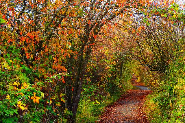 Reifel Migratory Bird Sanctuary in Autumn