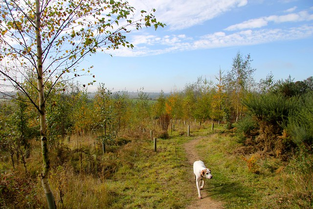 Berta the Harrier Hound explores The National Forest Cycling Centre at Hicks Lodge