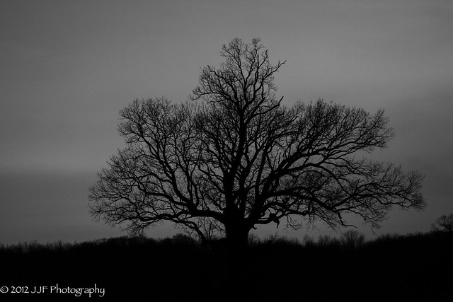2012_Nov_20_Moon and Tree_015