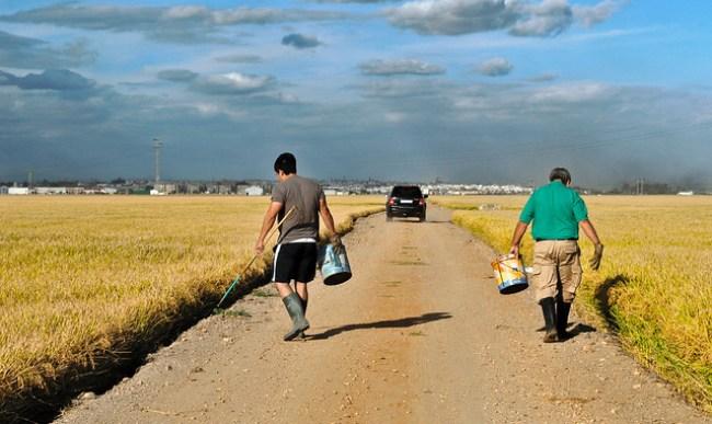 Dos hombres buscan cangrejos en los márgenes de los arrozales de La Puebla del Río, Sevilla