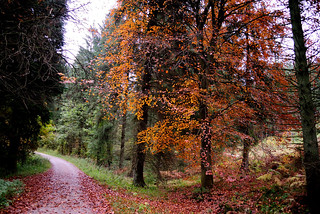 Dalby Forest October 2012 3