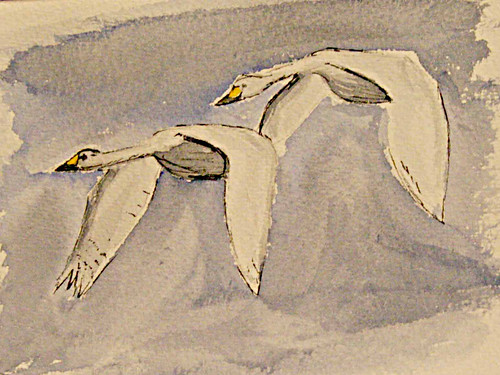 Whooper Swans @ Tophill Low NR, East Yorks, Nov 12