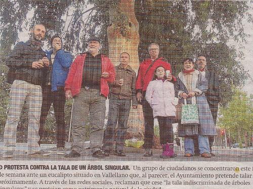 Protesta tala eucalipto de Avenida Conde Vallellano.