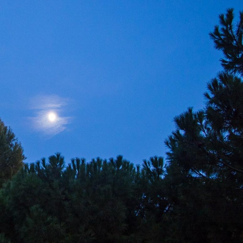 Luna entre los árboles del parque