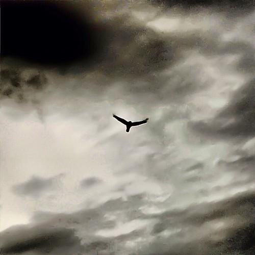 fly,fly,fly,fly,fly,fly,fly,fly,fly...