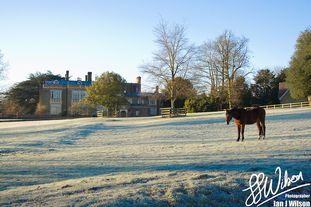 Frosty Lawn – Daily Photo (28th December 2012)