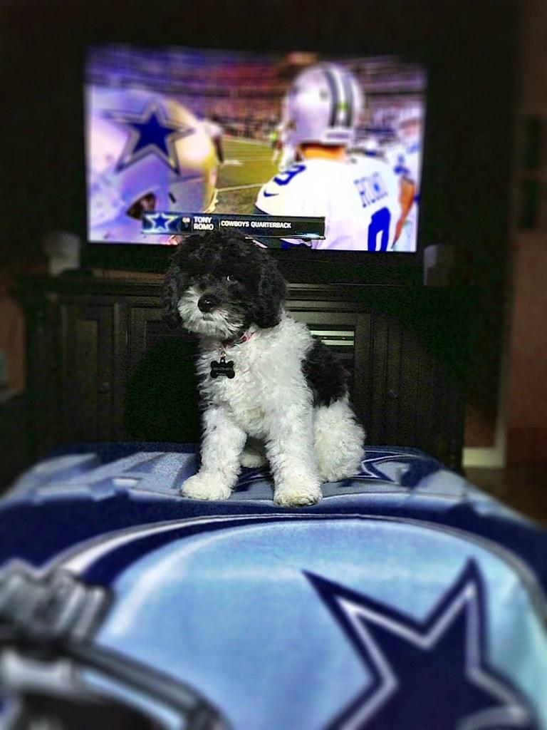Dallas Cowboys and Mojo the Dog
