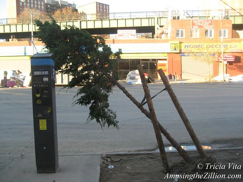 After Hurricane Sandy: Street Tree