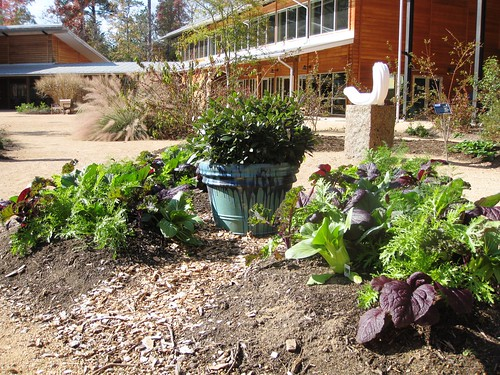 Green Healing in Horticulture by Rosa Blue