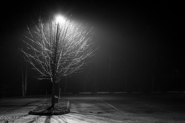 2012_Dec_10_Tree and Light_003
