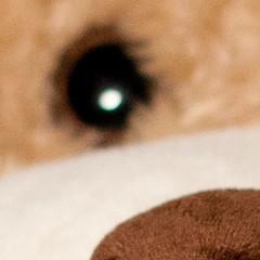 NoseFocus_eye