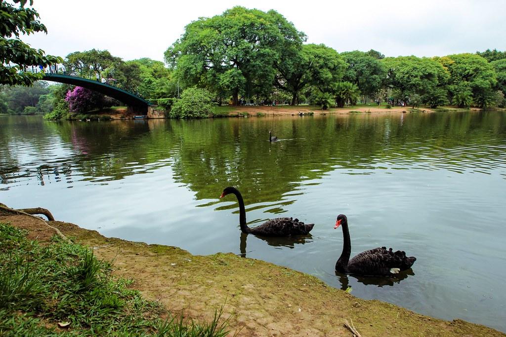 Parque do Ibirapuera - Sao Paulo, Brazil