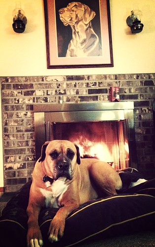 Levee chills at Duke's place.
